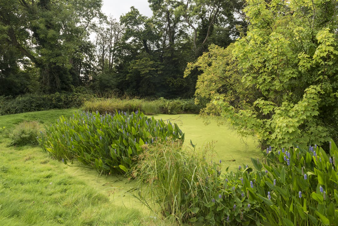 Image of fishponds