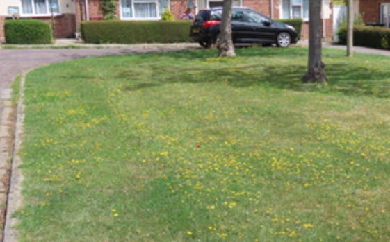 Year 2 example - this is when we expect wildflowers to begin to emerge
