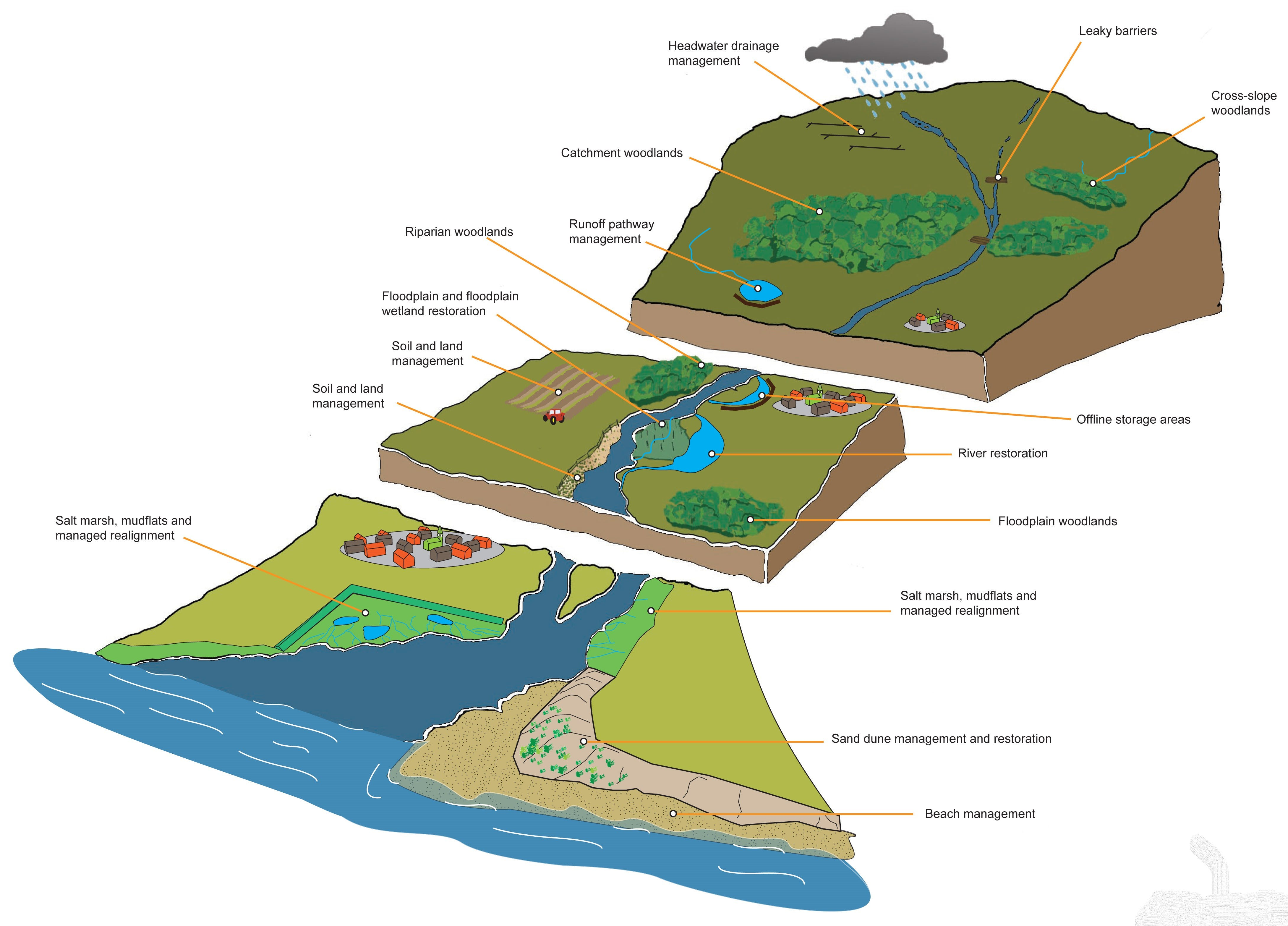 Working with Natural Processes illustration