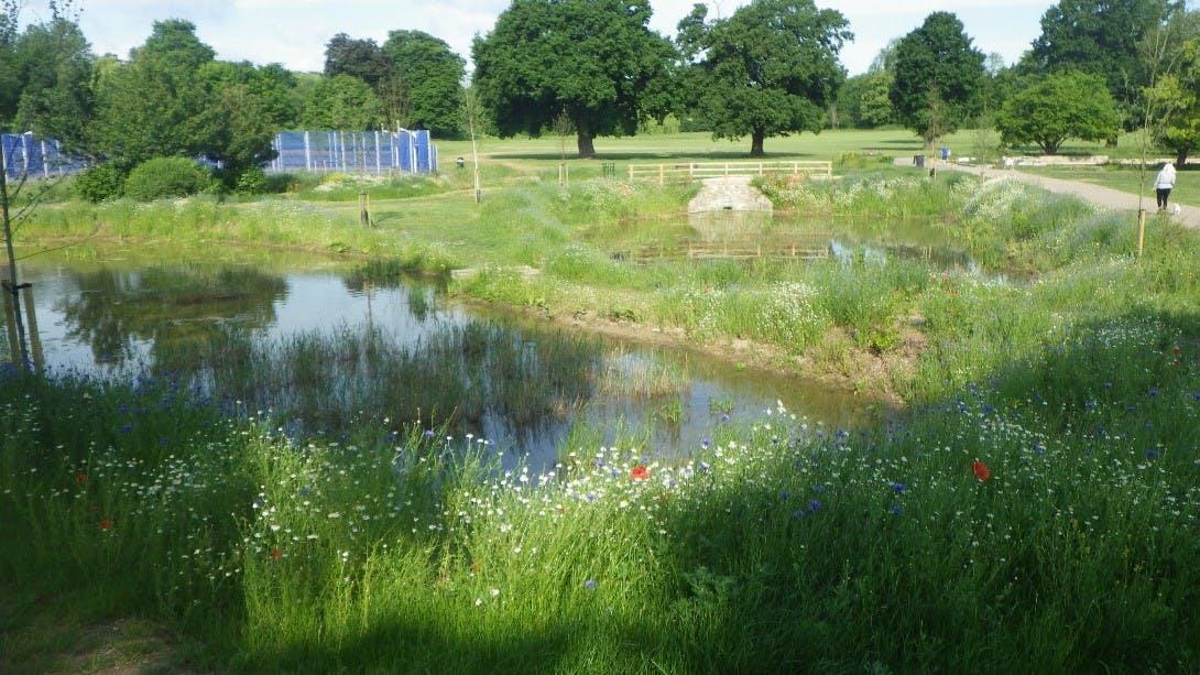 Enfield Town wetland scheme.jpg